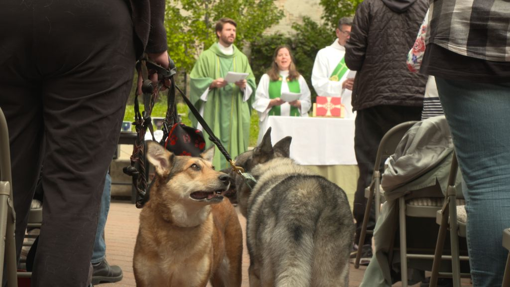 Dozens of dogs and a couple of horses showed up Sunday for the annual blessing of the animals. | Rahul Parikh/Sun-Times