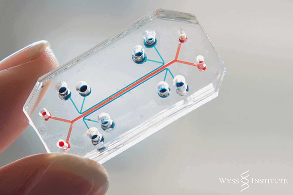 lung-on-a-chip