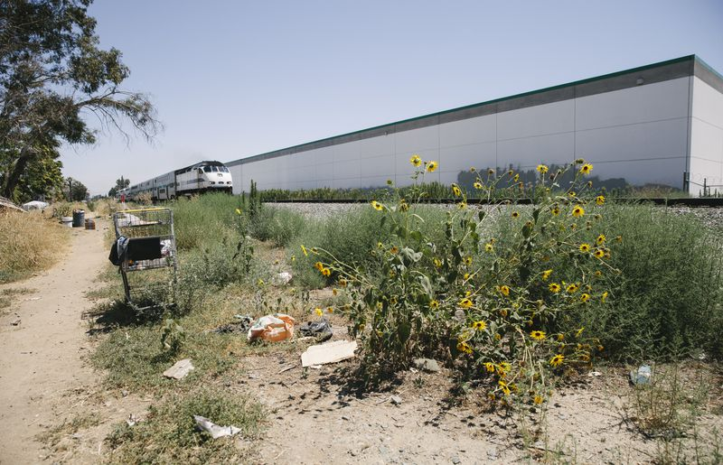 Train tracks surrounded by sunflowers, weeds, and trash.