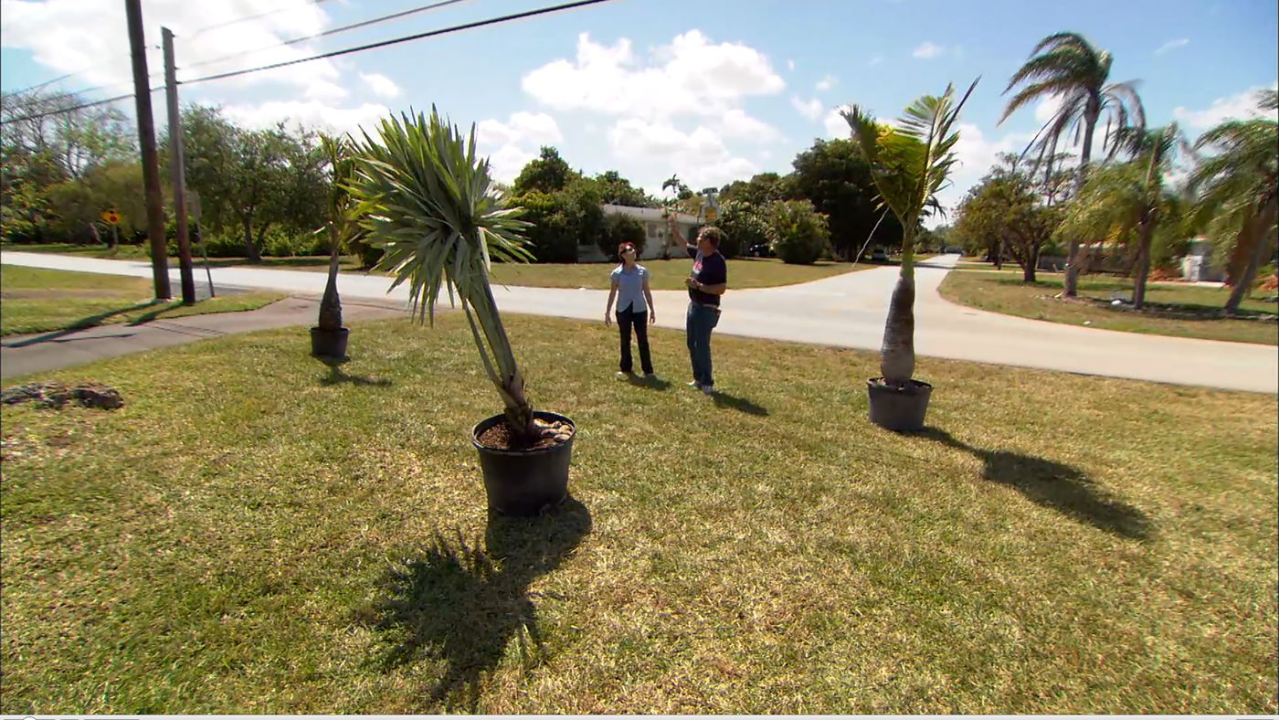 How To Plant Palm Trees This Old House