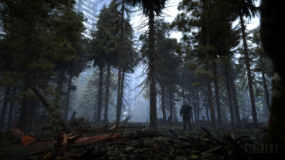 A forest outside Chernobyl