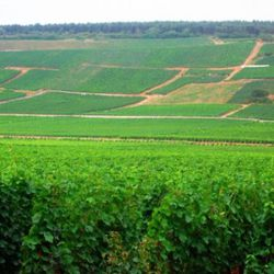 """<a href=""""http://eater.com/archives/2011/08/11/a-crash-course-in-pinot-noir-appreciation.php"""" rel=""""nofollow"""">A Crash Course In Pinot Noir Regions Around the World</a><br />"""