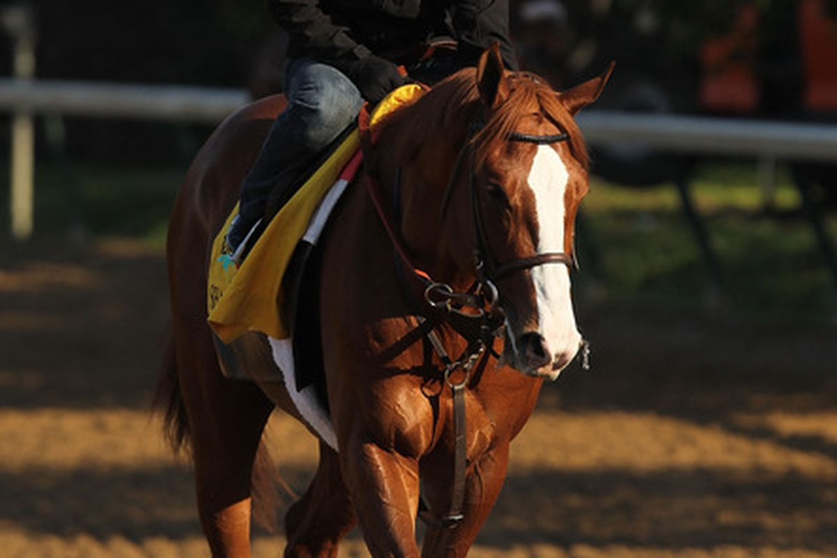 LOUISVILLE, KY - MAY 05:  Shackleford trains during the morning exercise session in preparation for the 137th Kentucky Derby at Churchill Downs on May 5, 2011 in Louisville, Kentucky.  (Photo by Al Bello/Getty Images)