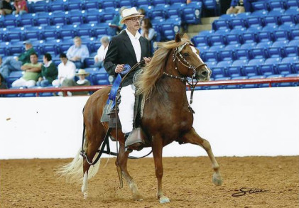 Dr. Jorge O. Galante bred and raised Peruvian horses, a breed also known as the Peruvian Paso. Its smooth gait didn't irritate his back problems. | Facebook photo from North American Peruvian Horse Association