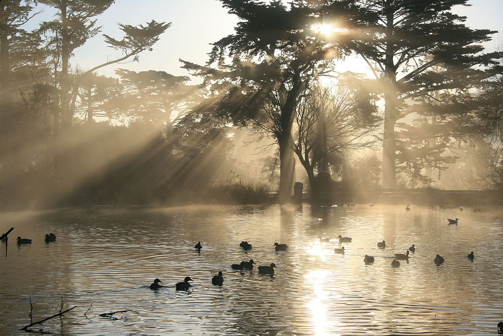 Stow Lake in San Francisco. There are ducks swimming in the lake. The sun is shining through the trees that surround the lake.