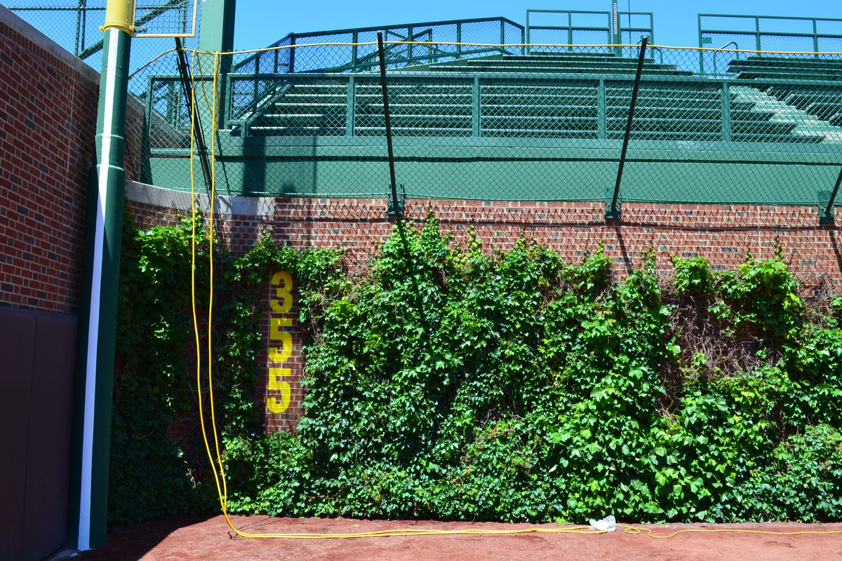 The Wrigley Field Ivy And The New Left Field Wall Bleed