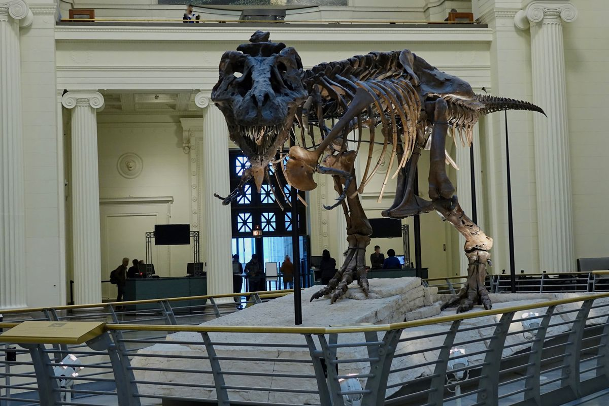 Trex For Sale >> The Field Museum is moving SUE the T. rex—visit to see the ...