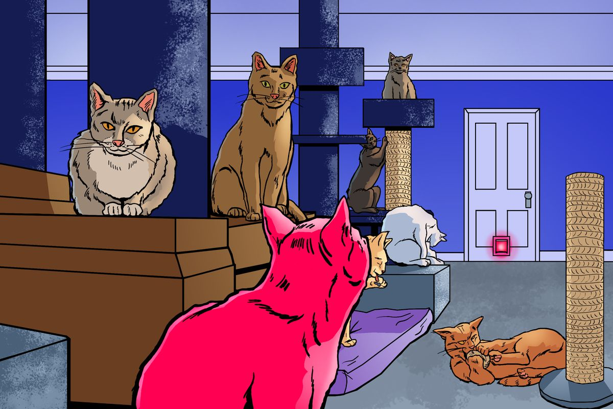 Several cats lounge and play in a living room. The closed door to the room also contains a cat door, with pink light streaming through it.