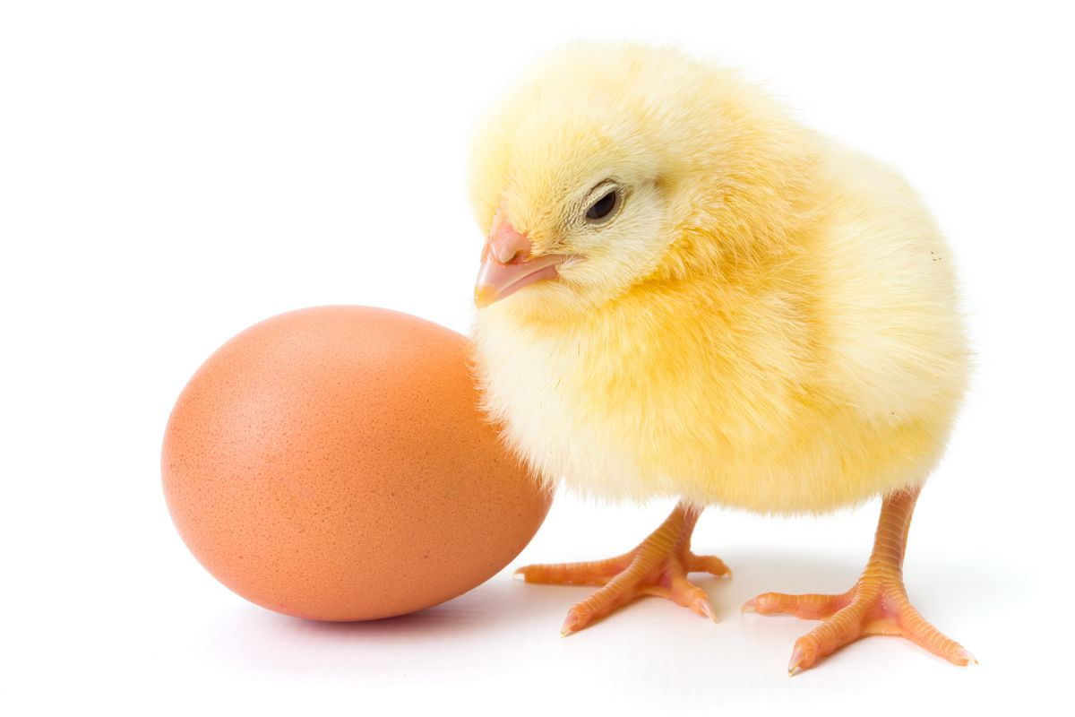 Who came first, amirite? Sorry, I am not right, that joke is terrible.