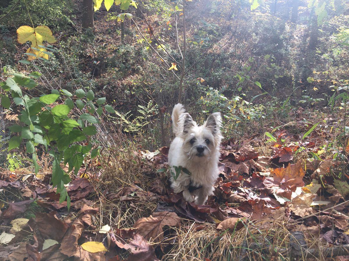 Clara's dog Alfie