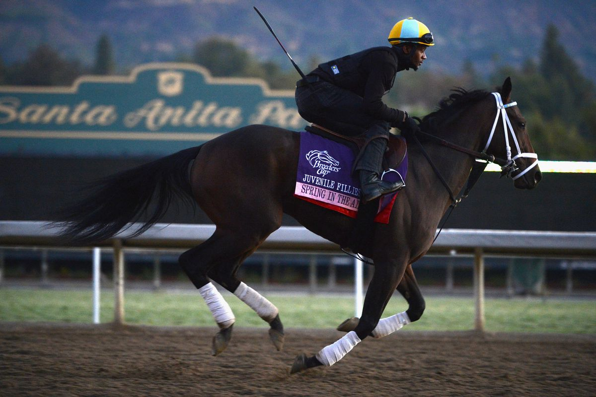 Breeders Cup 2012 Juvenile Fillies Preview Sbnation Com