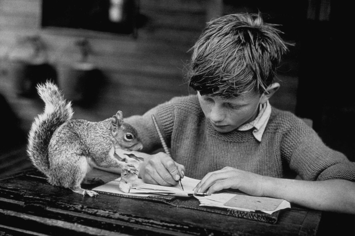 A boy does homework with his pet squirrel in the 1940s.