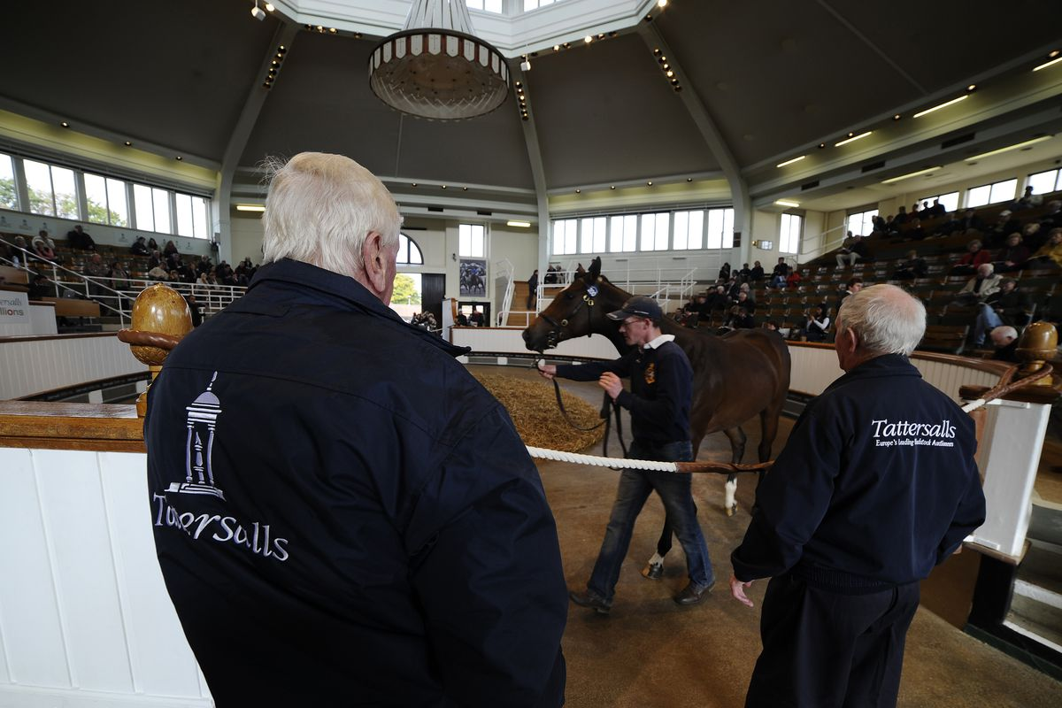 This is from a sale in England but, hey, it's a horse in a sales ring.