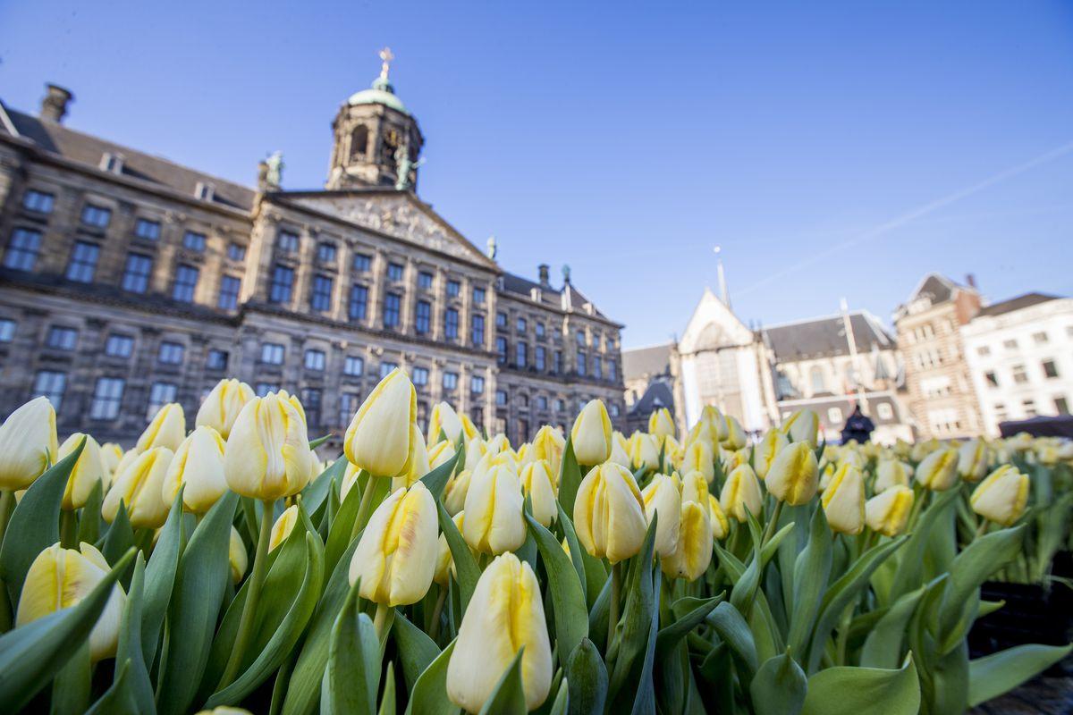 Dutch National Tulip Day Kicks Off Tulip Season 2017 In Amsterdam