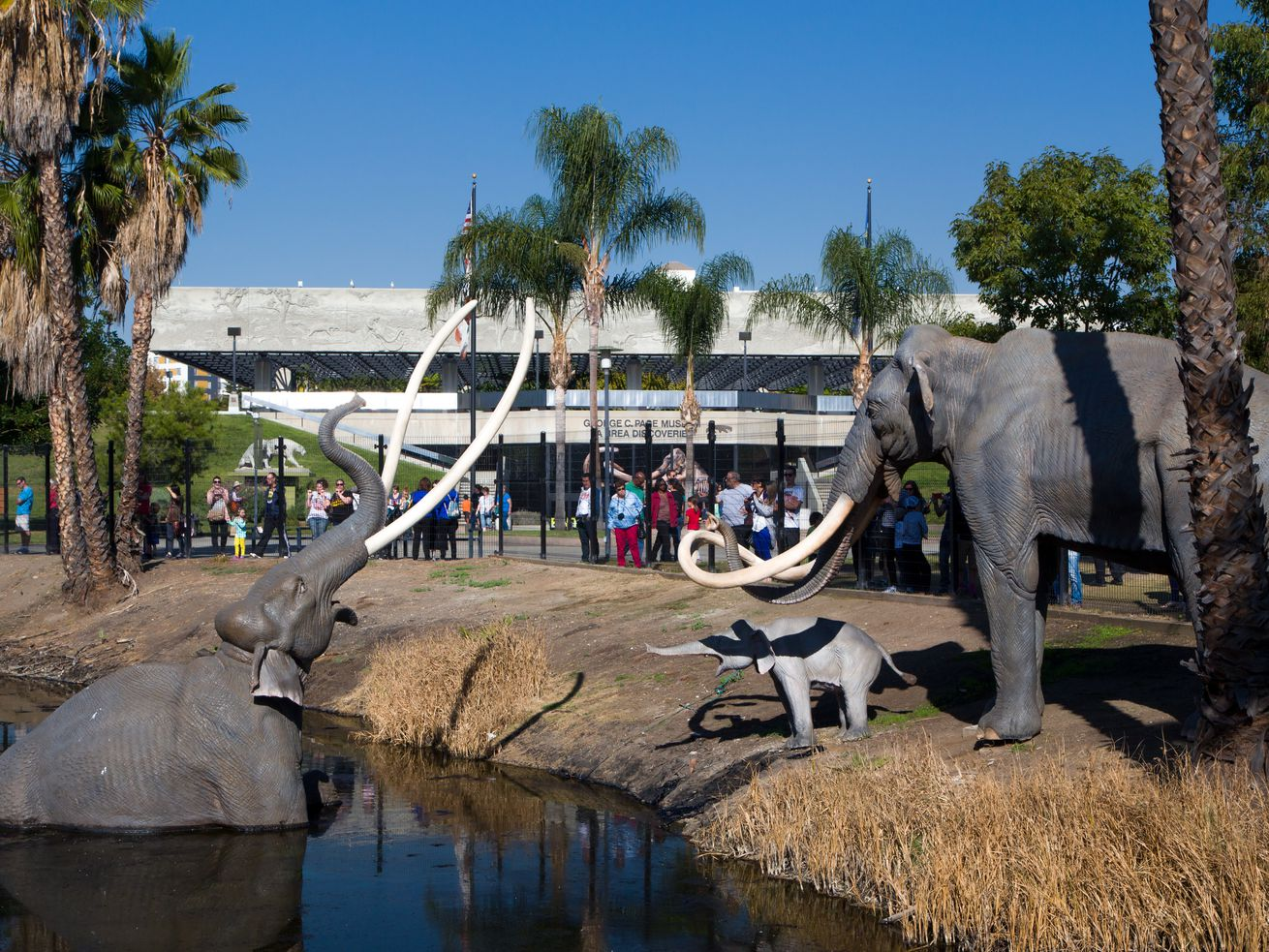 The 12-acre site includes the tar pits and George C. Page museum.