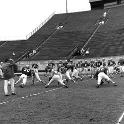 1964-Coach Peterson, back to camera, watching FSU football scrimmage in Tallahassee.