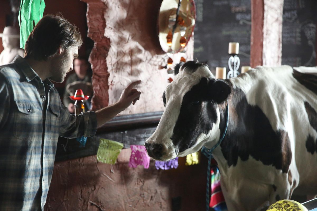 There's a cow on this show.