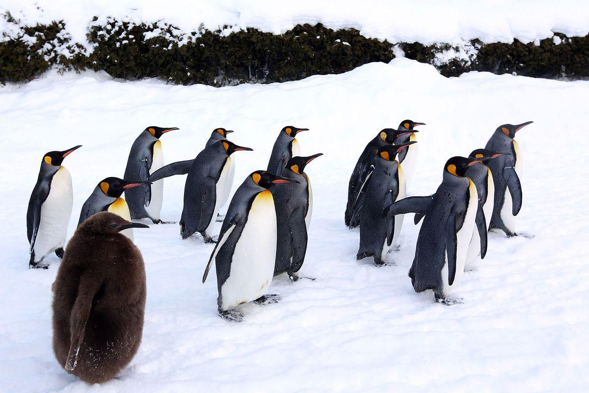 Up Close Viewing Of Animals Attracts Visitors To Asahiyama Zoo