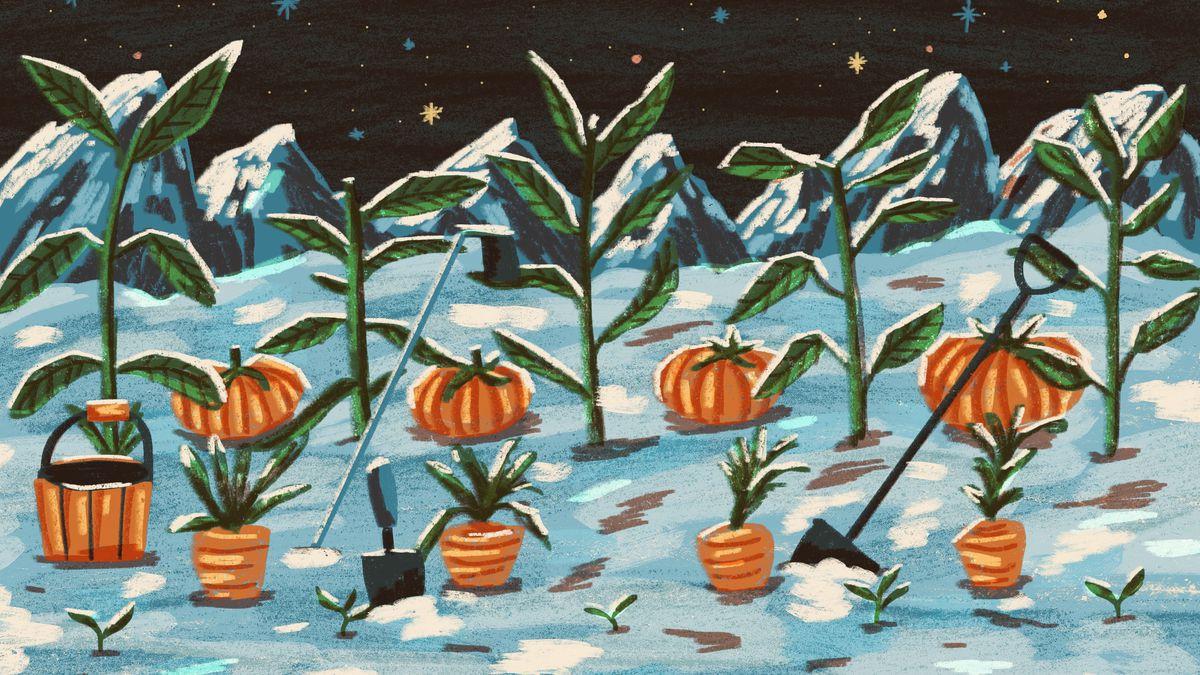 An original illustration shows plants and pumpkins in a garden