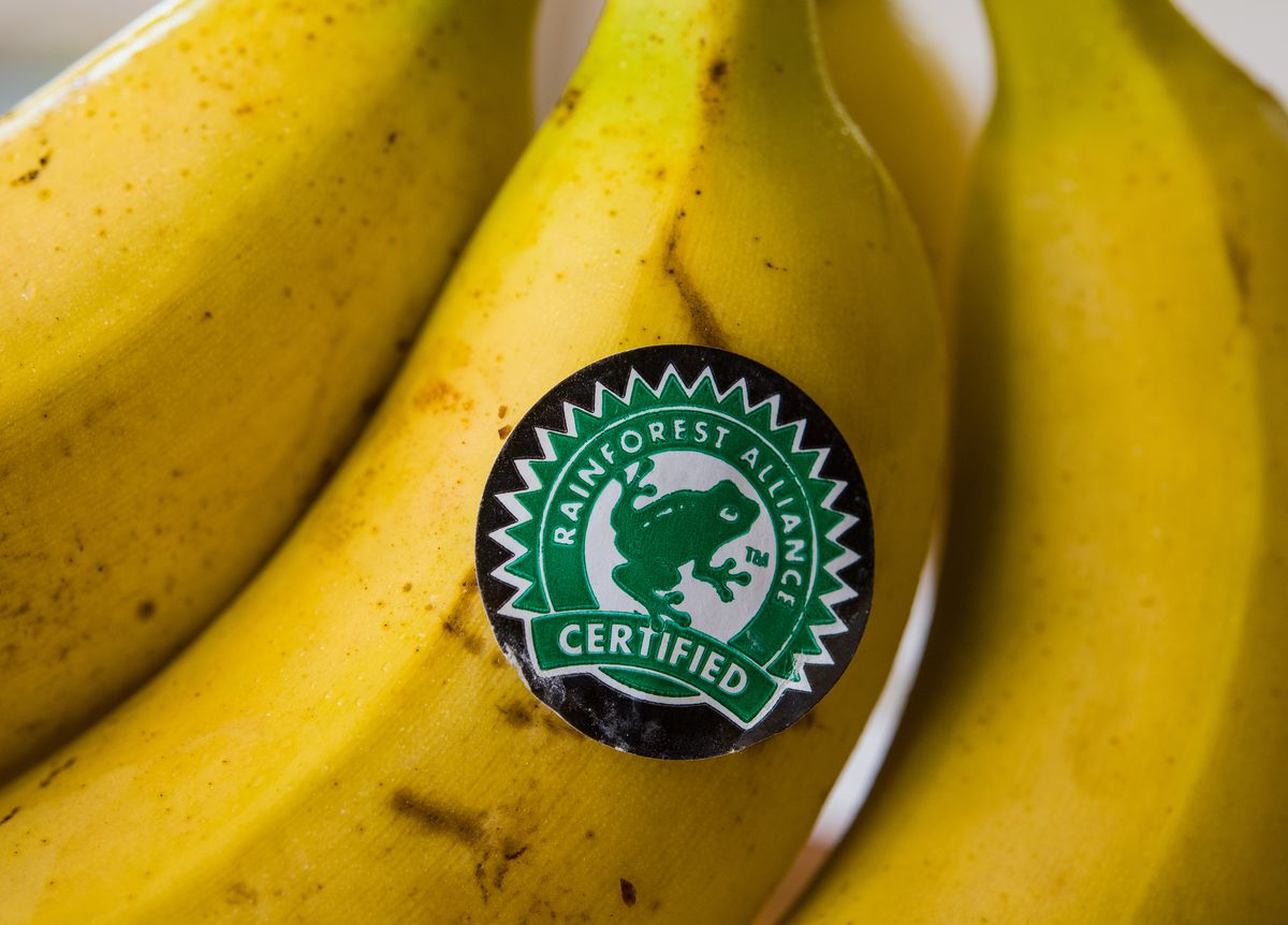 The Rainforest Alliance seal with a picture of a tree frog, affixed to one of a bunch of bananas.