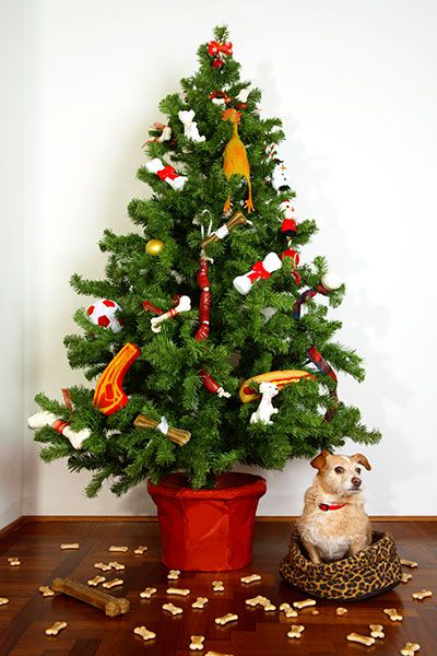 Dog under a Christmas tree.
