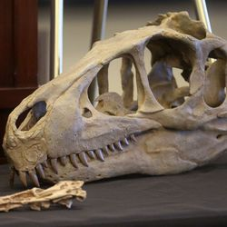 A Utahraptor skull reconstruction is displayed during a press conference at the Capitol in Salt Lake City on Friday, Feb. 14, 2020, to discuss HB322, which would create Utahraptor State Park in the Dalton Wells area near Moab.