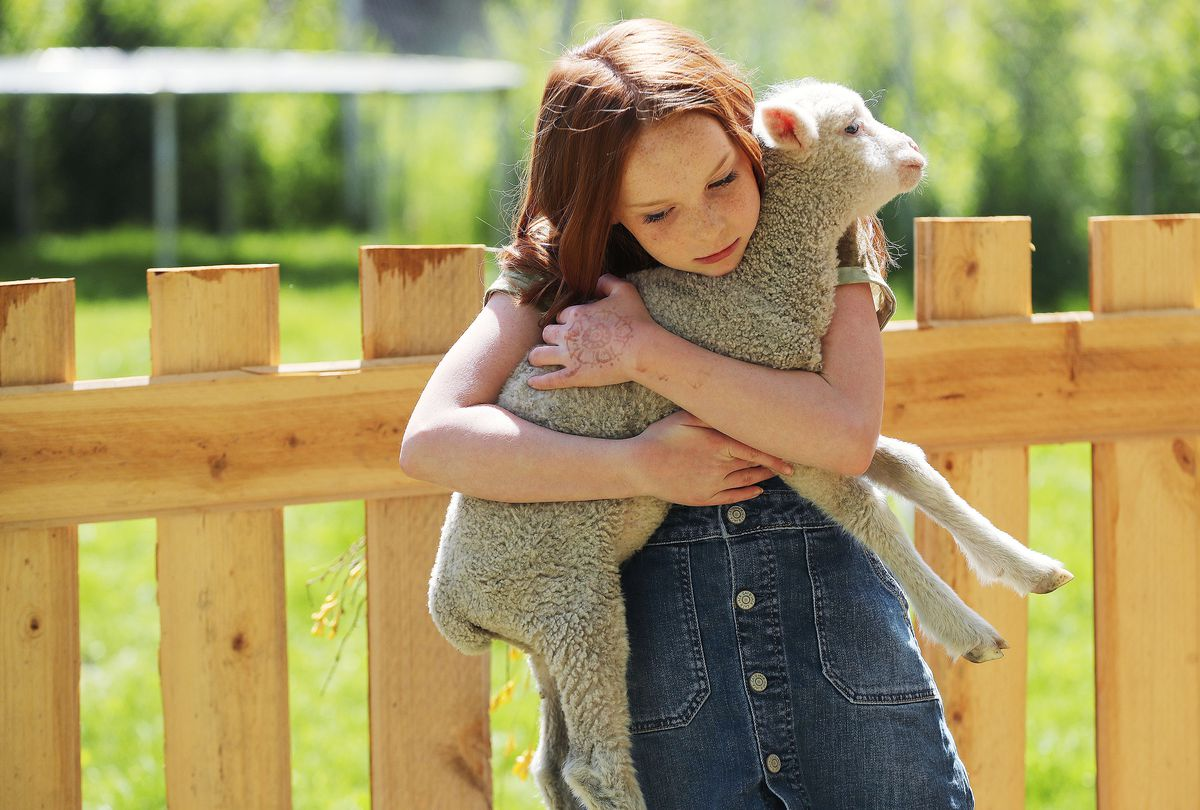 Lucie Moffitt, 10, hugs one of her lambs at her family's home in Grantsville on Friday, May 21, 2021. Jamie Moffitt, Lucie's mother, decided to teach her children about responsibility and then trust them to have a childhood.