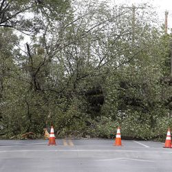 A large tree blocks 1500 East at 1300 South after it was toppled by high winds in Salt Lake City on Tuesday, Sept. 8, 2020.
