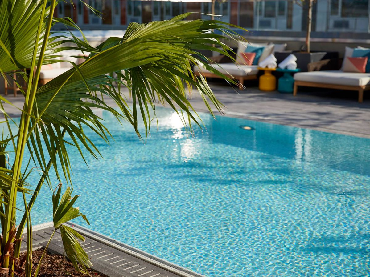 Several palm fronds are visible in front of a pool of water on a clear day
