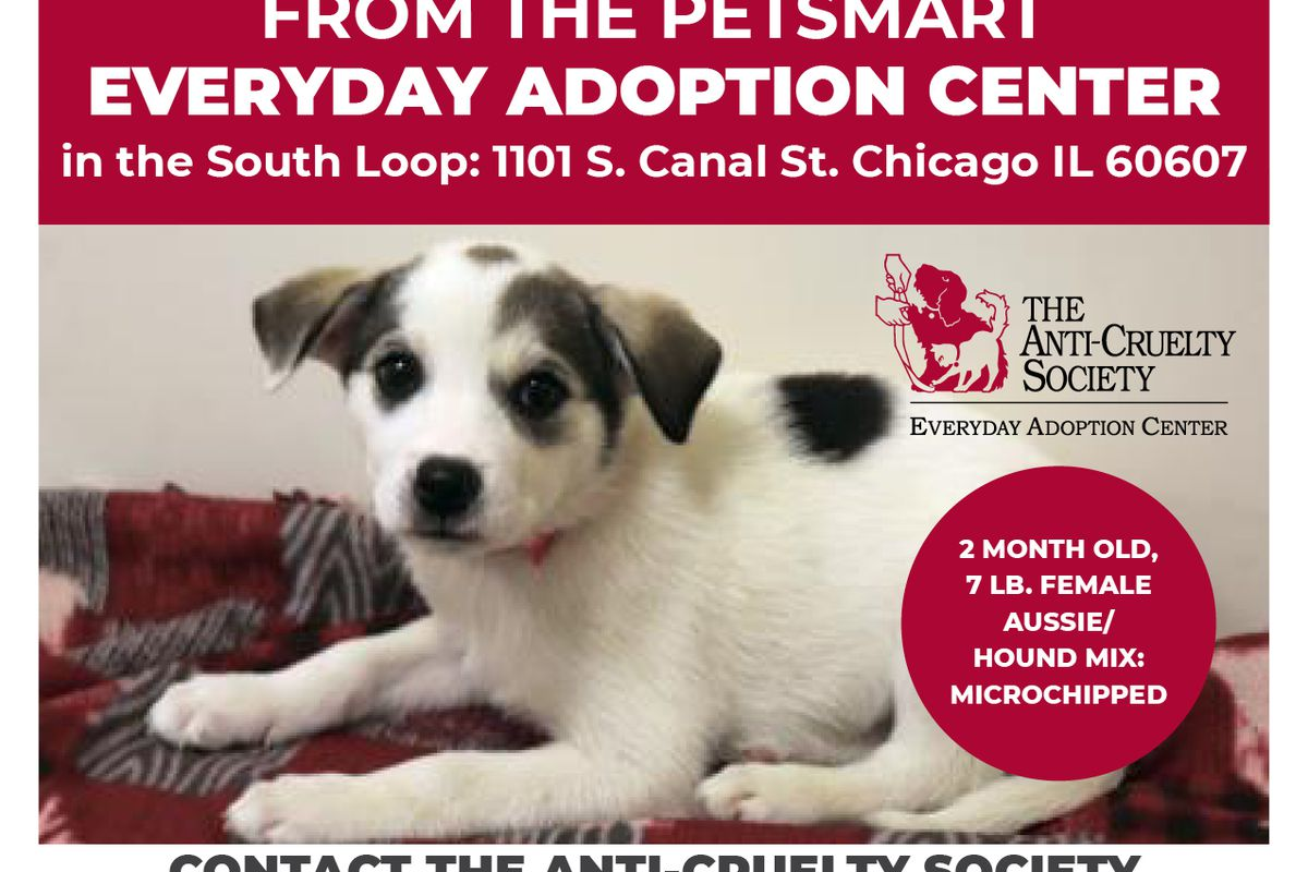 The Anti-Cruelty Society shared an alert on its social media after a puppy was stolen Oct. 30, 2019.