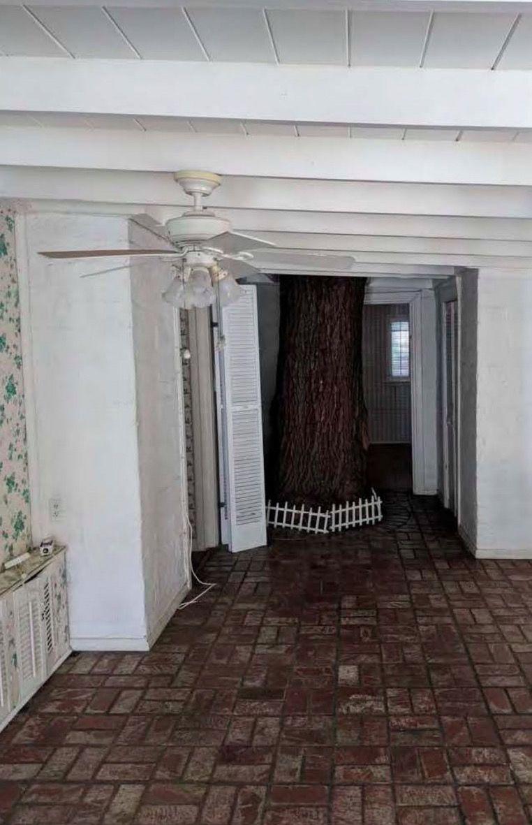 tree in Albert Zwebell house