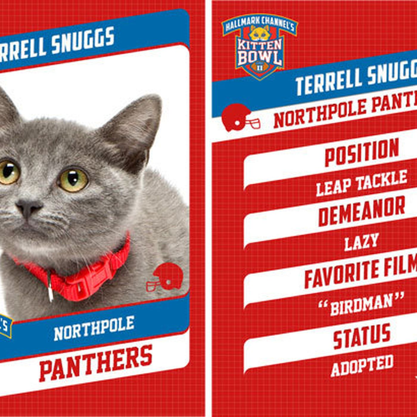 The Kitten Bowl S Kittens Are Named After Nfl Players Sbnation Com