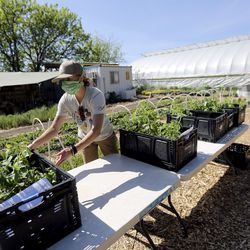 Savannah Simmons-Grover, Americorps youth educator, moves crates of plants at Wasatch Community Gardens' Green Phoenix Farm in Salt Lake City on Tuesday, May 5, 2020.