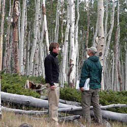 USU graduate student Cody Mittanck and Fishlake National Forest ecologist Robert Campbell discuss concerns for the future of the Pando aspen clone.