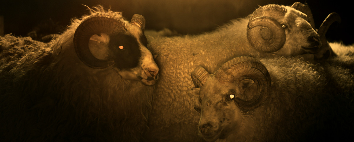 a bunch of sheep with eerie yellow eyes just chilling