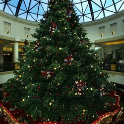 A 30-foot tree perches atop the carousel, twinkling with over 22,450 miniature lights.