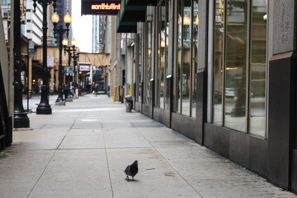 Having space to yourself, like this pigeon has at Lake Street and Clark Street in the Loop, is one of the small things that Chicagoans say bring them a little joy during the pandemic.