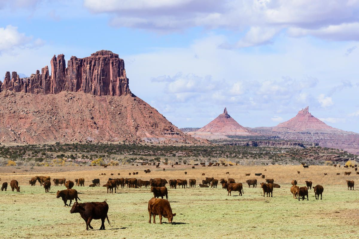 Clashes over land use resulted in new charges being filed in the San Juan County case of an environmental activist accused of blocking cattle from a water source, underscoring tensions involving ranchers, environmental groups and local residents.
