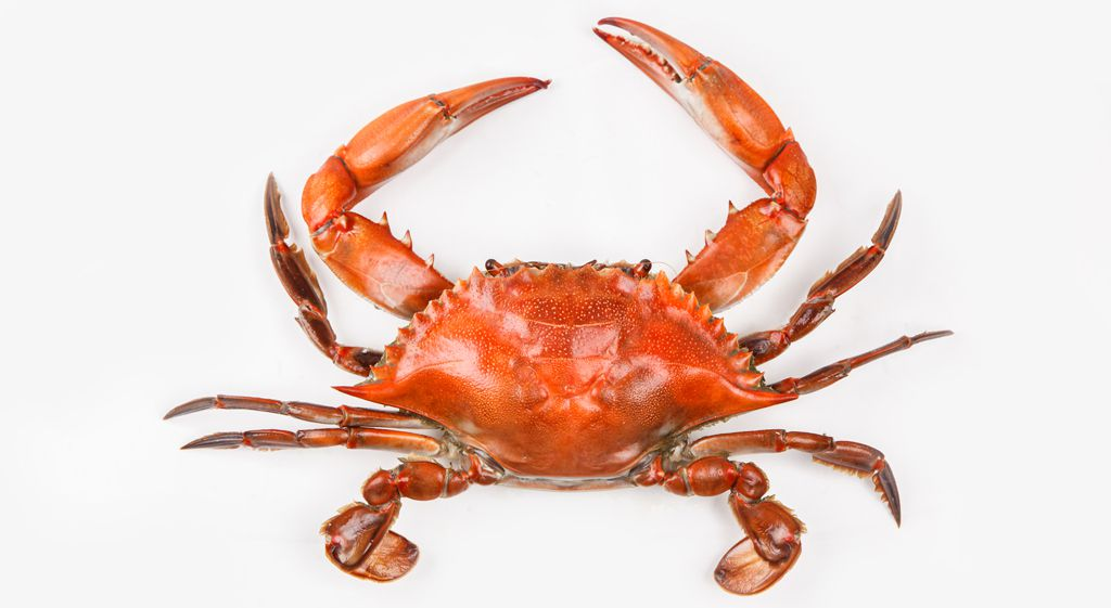 Maryland Crabs: A Guide to the East Coast's Essential ...