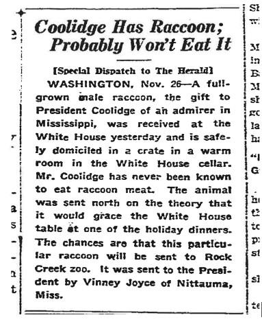 "Headline reading, ""Coolidge Has Raccoon, Probably Won't Eat It"""