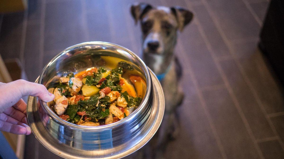 I Tried Cooking for My Dogs — Here's What I Learned