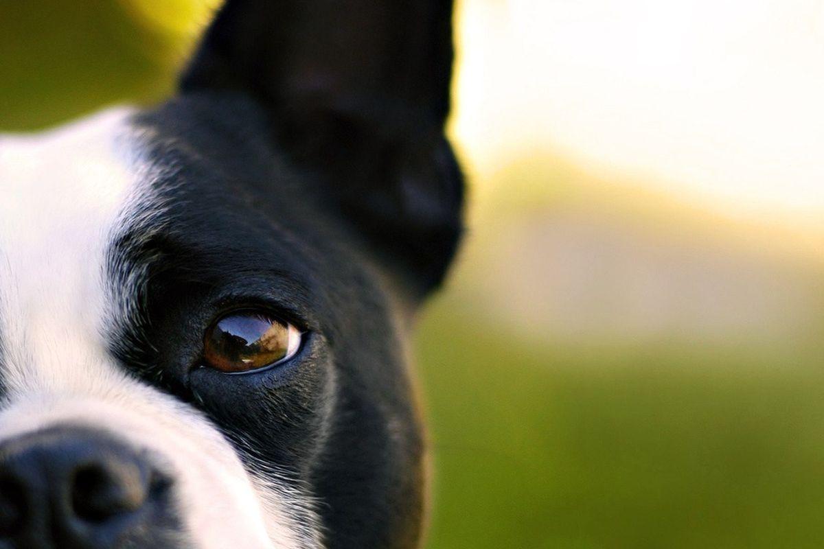 "<a href=""http://www.dogosf.com"">Dogo</a>"