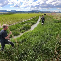 Wally Dodds and his son Makoy work in their fields Monday, June 8, 2015, in Panguitch.