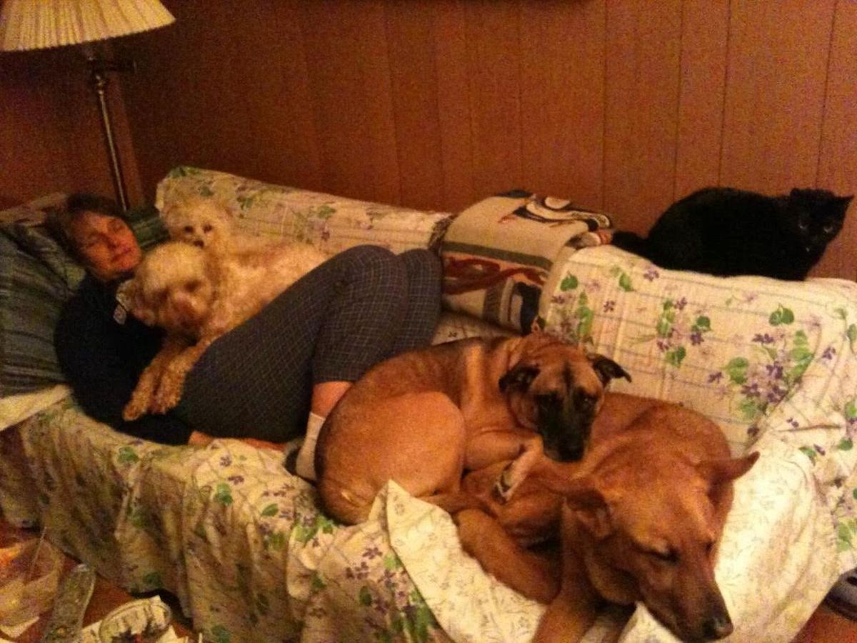 Nancy Lipman relaxing with her dogs Ben and Max on her lap and Gertie and Morgan -- who was found on Morgan Avenue -- at her feet. Her cat Millie perches above her.
