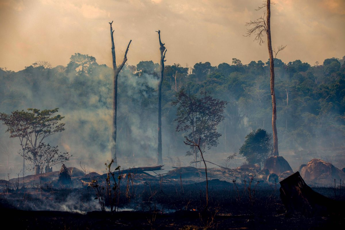 Amazon Rainforest Fire Why Deforestation Has Been So Lucrative Vox