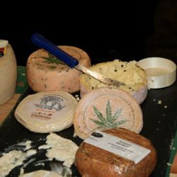 Yup, hemp cheese.