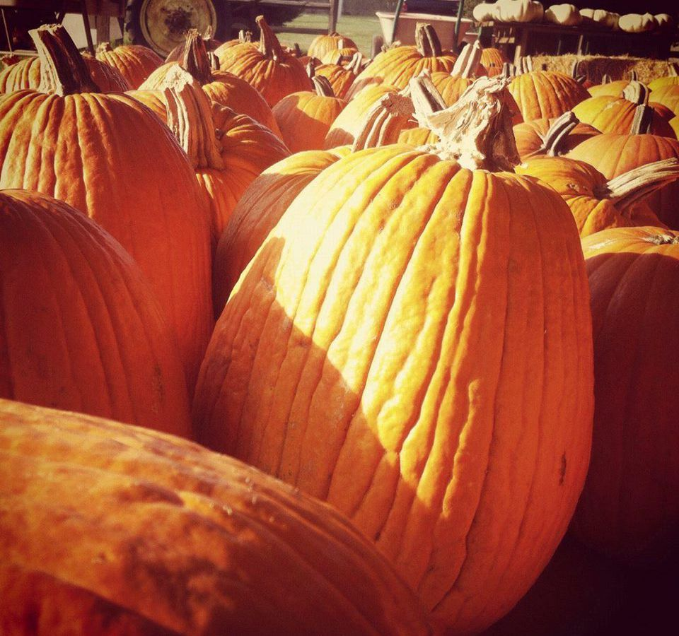 A pile of large orange pumpkins.