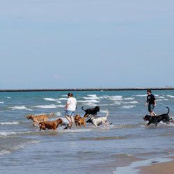"""""""To help our bellies digest breakfast, we stroll along <b><a href=""""http://www.chicagoparkdistrict.com/parks/montrose-beach/"""">Montrose Dog</a></b> beach with our two-year-old rescue pup, Louis. The beach gets pretty packed on the weekends, so we keep our e"""