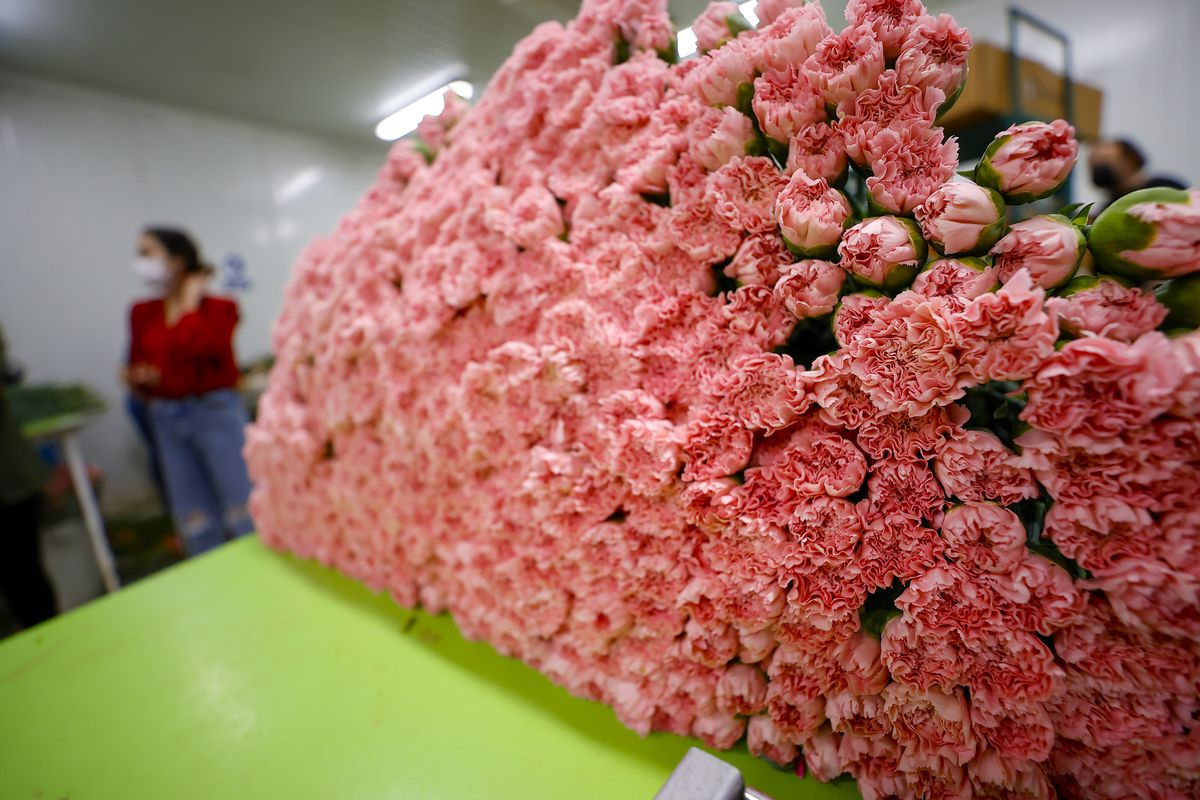 Flowers prepared for upcoming Mother's Day in Antalya