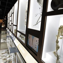 Dozens of treasures are seen on public display at the Academy of Natural Sciences Friday, March 23, 2012 in Philadelphia. The Academy is celebrating its bicentennial by offering the general public some rare behind-the-scenes tours of their some 18 million specimens. (AP Photo/Alex Brandon)